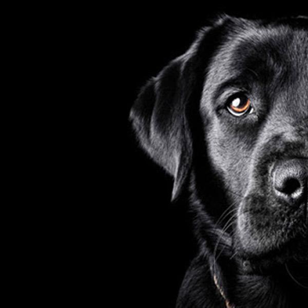 petopolis hrana za pse